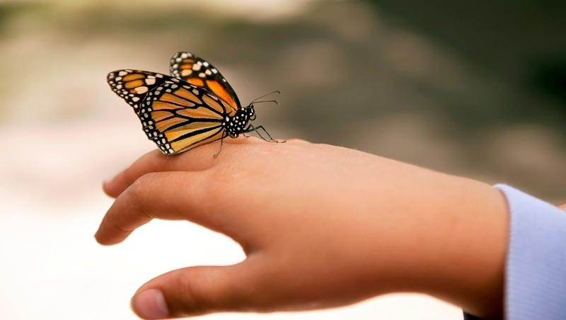 Epidermolysis bullosa, Schmetterlingskrankheit